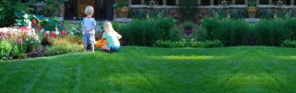 Eugene Organic Lawn Care